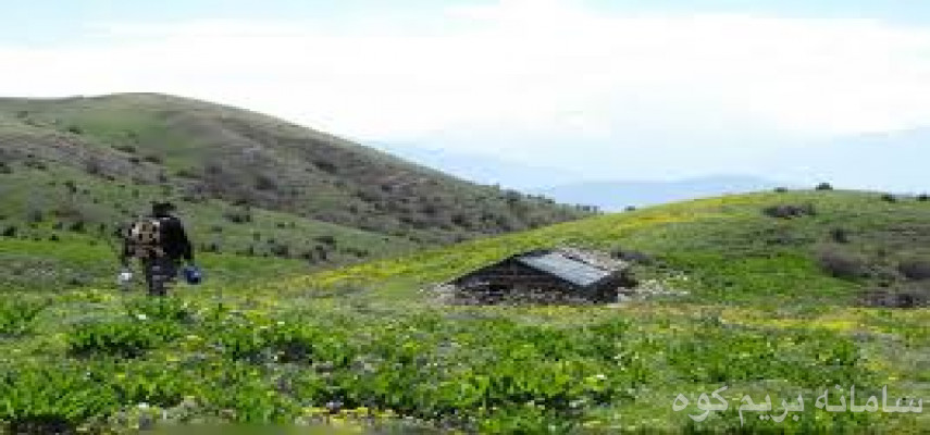 امامزاده قاسم الیمستان