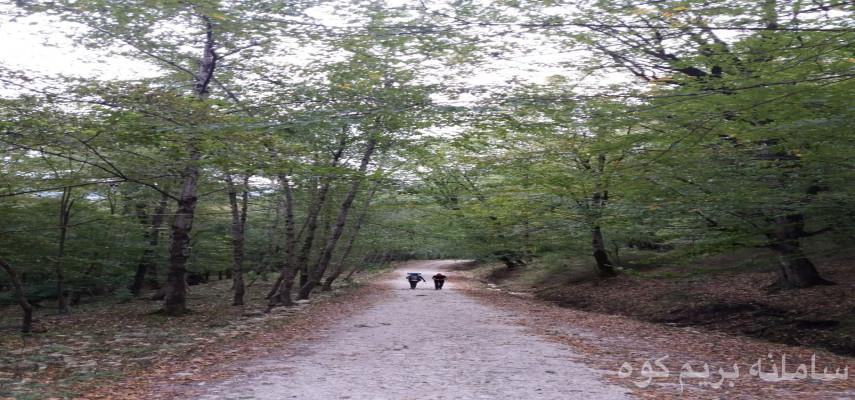 طبیعت گردی جنگل الیمستان