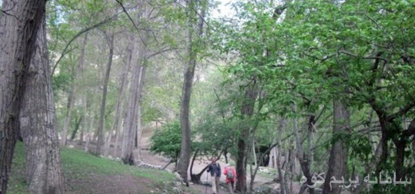 پیمایش جنگل کارا
