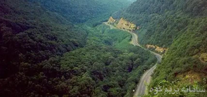 جنگل مکیدی