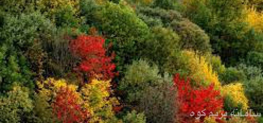 """""""""""پاییز بسیار زیبا و هفت رنگ شمال را از دست ندهید """""""""""