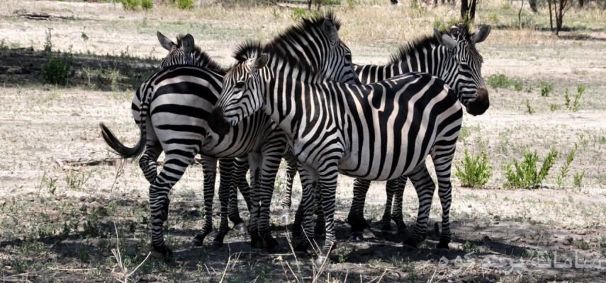 صعود قله کلیمانجارو و دیدار از حیات وحش تانزانیا