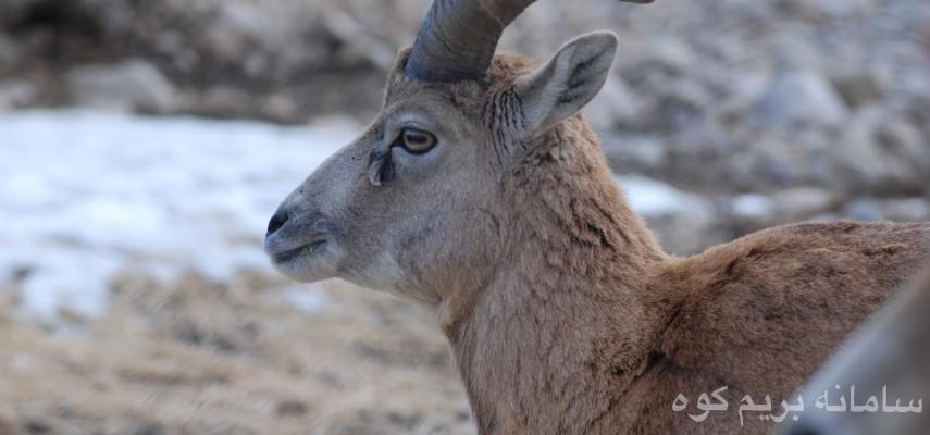 پیمایش از منطقه حفاظت شده پرور (استان سمنان) تا جنگل بولا و آبشار اوبن(مازندران)