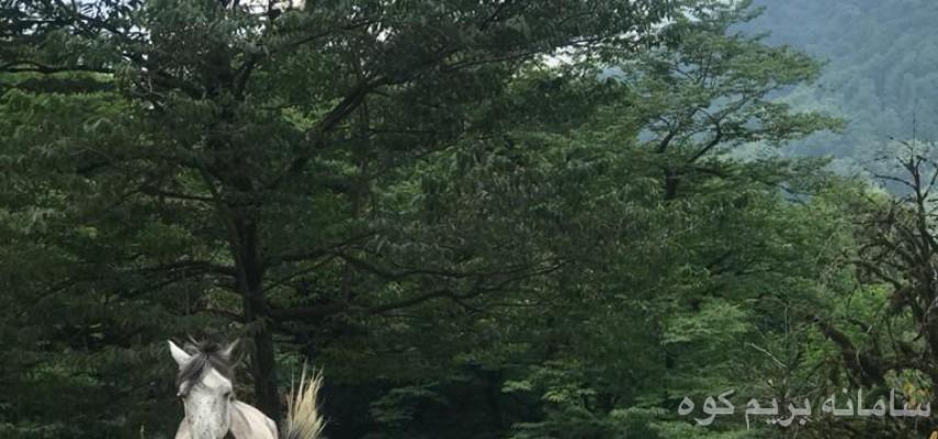 تور مفرح و شاد پلنگ دره و دریاچه سنبل رود