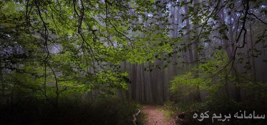 جنگل الیمستان
