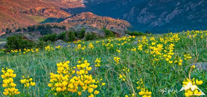 دوره آنلاین مقدماتی آشنایی با گیاهان خوراکی و سمی کوهستان در فصل بهار