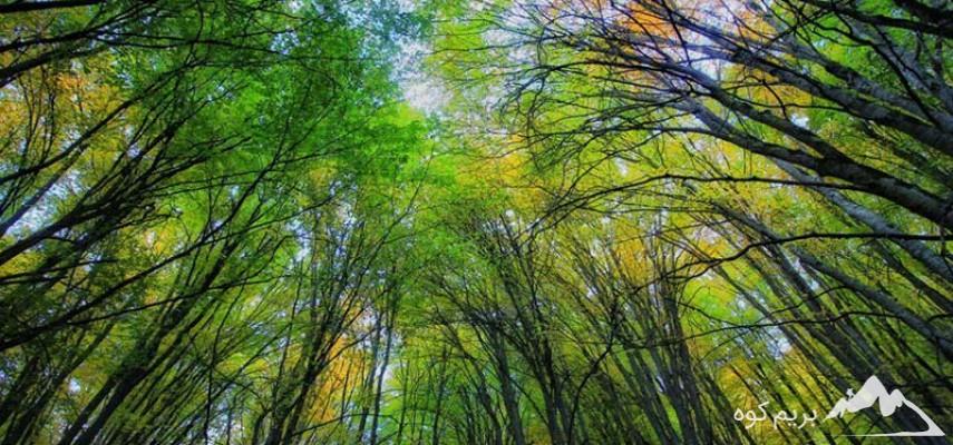 دوره آنلاین آشنایی با درختان و درختچه های حوزه رویشی هیرکانی (خزری)