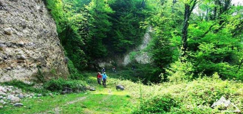 کمپینگ جنگل بلیران