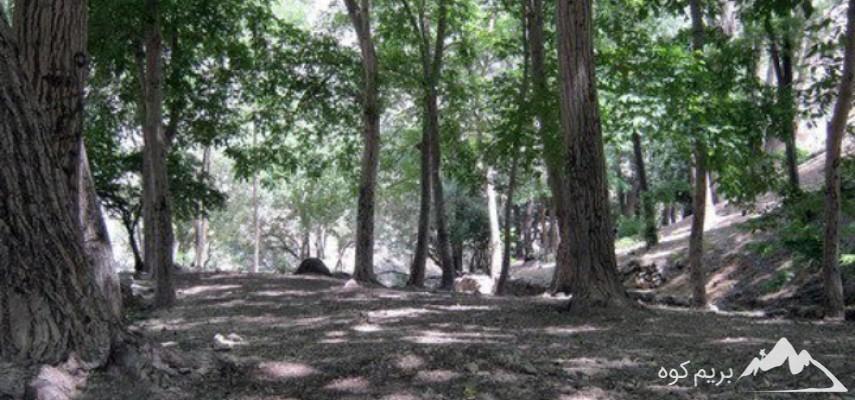 جنگل کارا