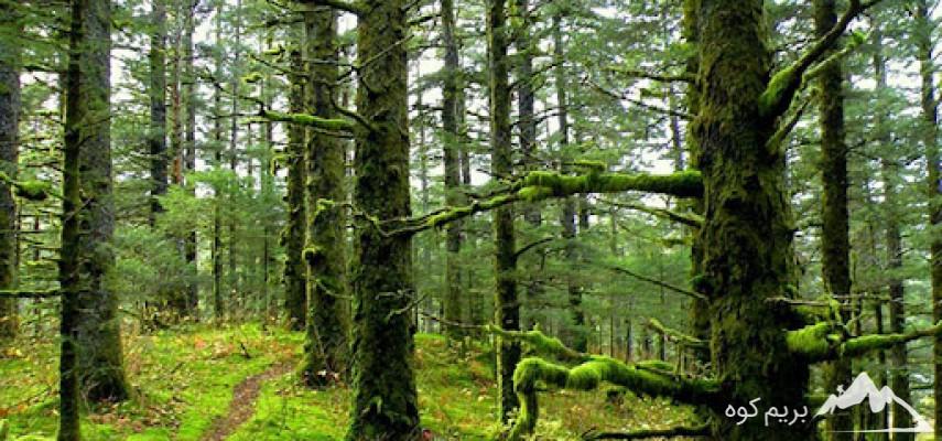 پیمایش جنگل و قله الیمستان