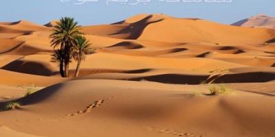 بقا در کویر و مهارتهای نجات در این اقلیم