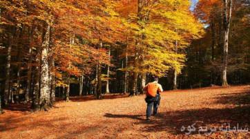 کمپینگ و پیاده روی در جنگل های هیرکانی