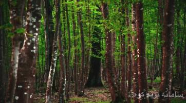 کُدیر به پارک جنگلی سیسنگان